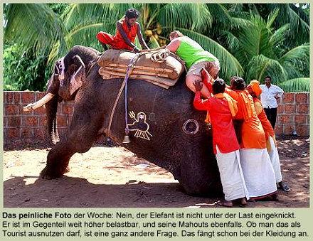 Eine Elefant, vier Inder und eine Amerikanerin
